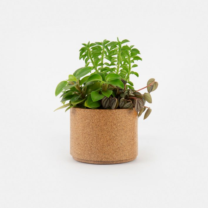 Larger_Planter