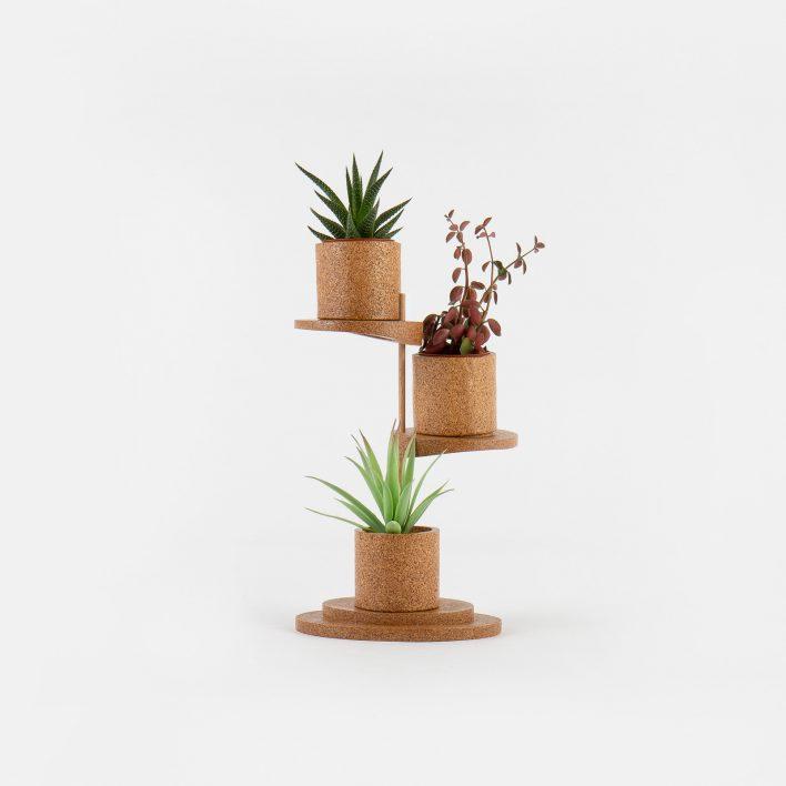 Succulent_Display_1