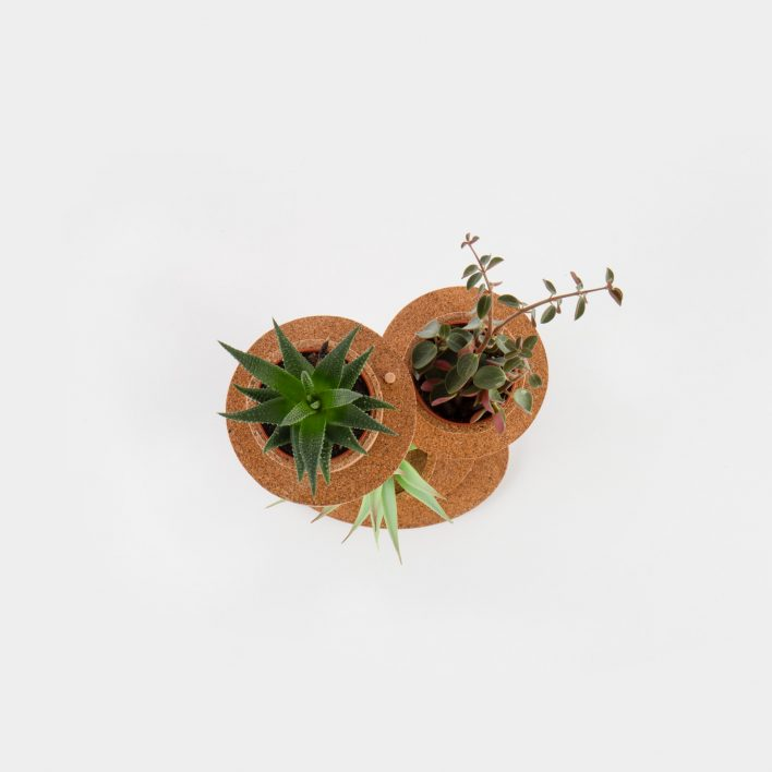 Succulent_Display_3